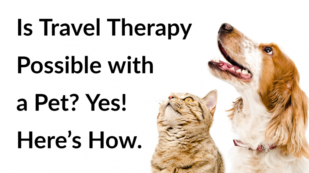 travel-therapy-pets-main